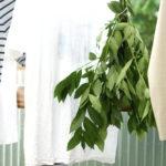 洗濯物と月桂樹を干す