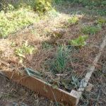 木枠畝づくり